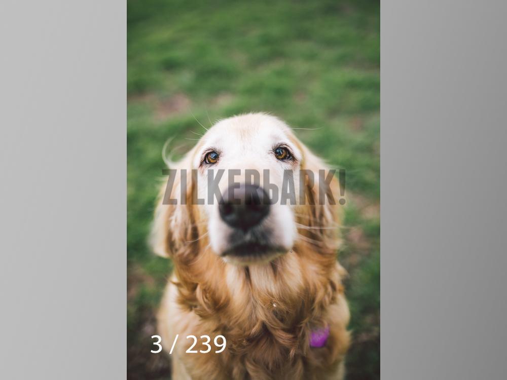 2.20 Dogs-003.jpg
