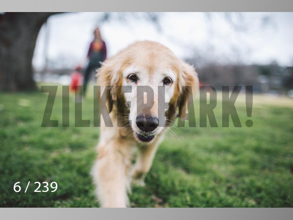 2.20 Dogs-006.jpg