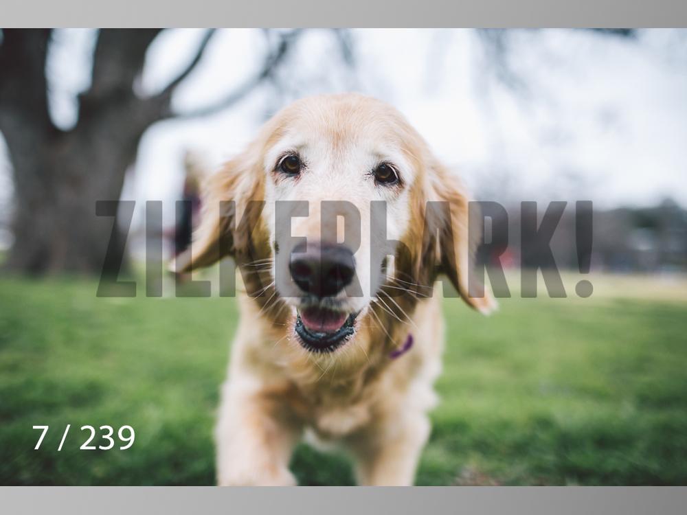 2.20 Dogs-007.jpg