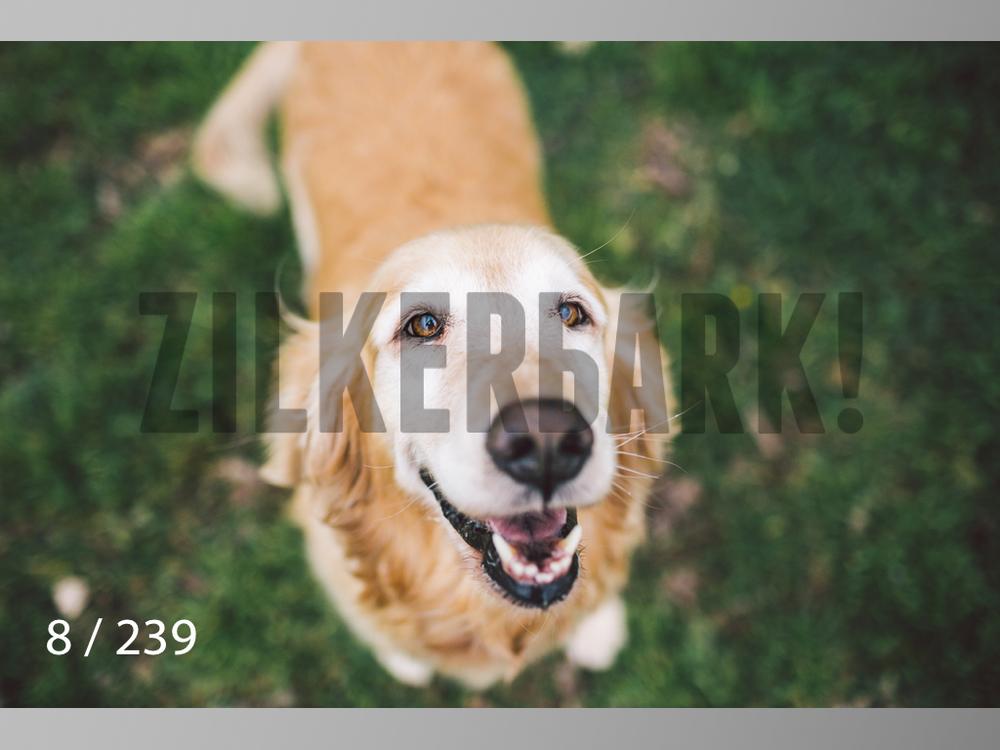 2.20 Dogs-008.jpg