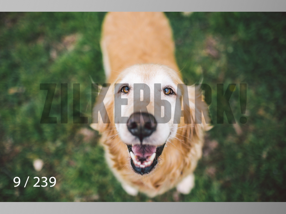 2.20 Dogs-009.jpg