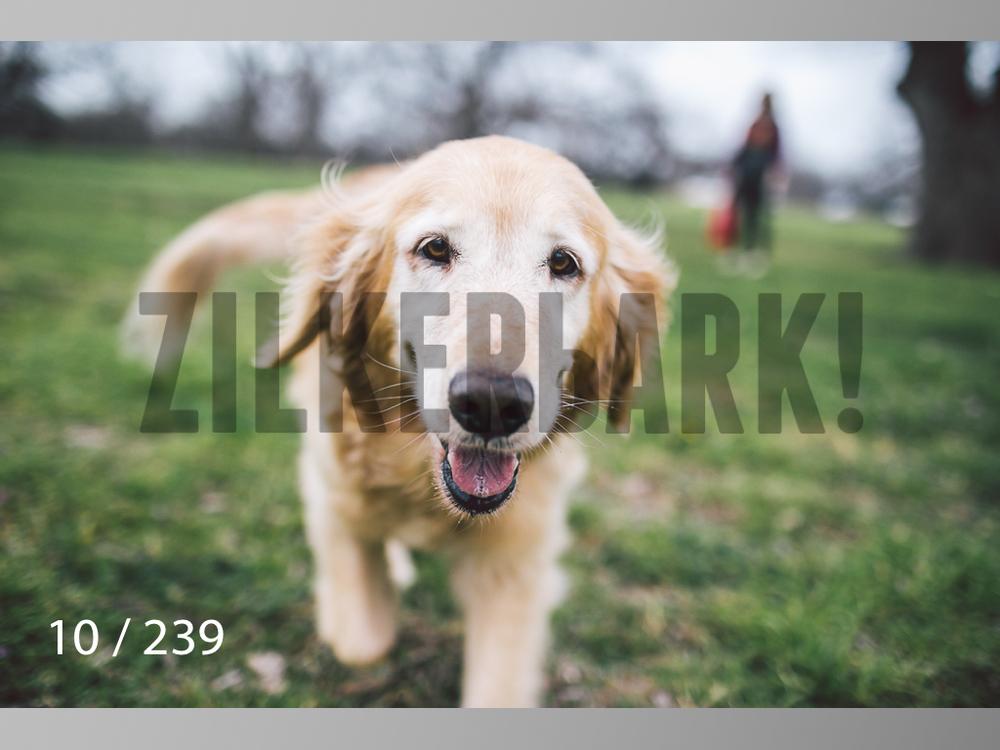 2.20 Dogs-010.jpg