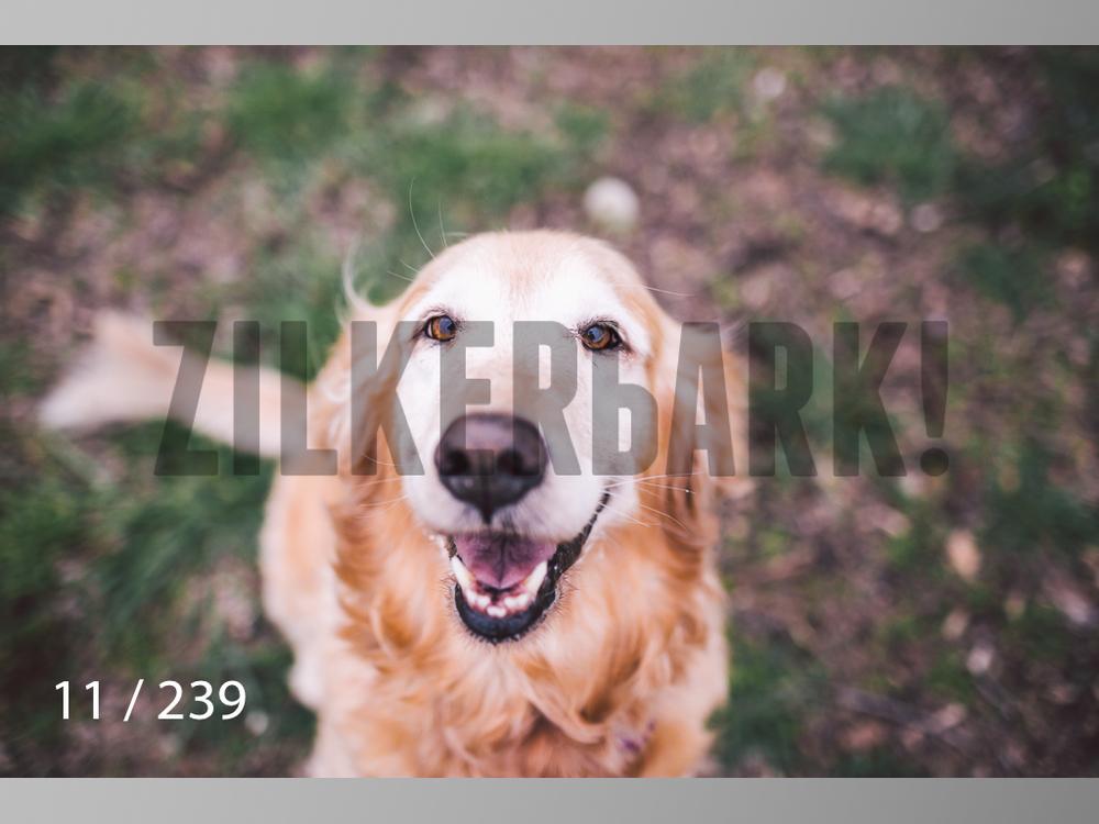 2.20 Dogs-011.jpg