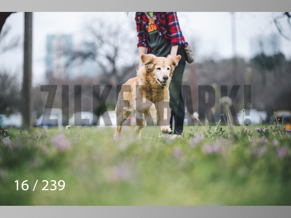 2.20 Dogs-016.jpg