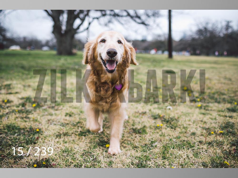 2.20 Dogs-015.jpg