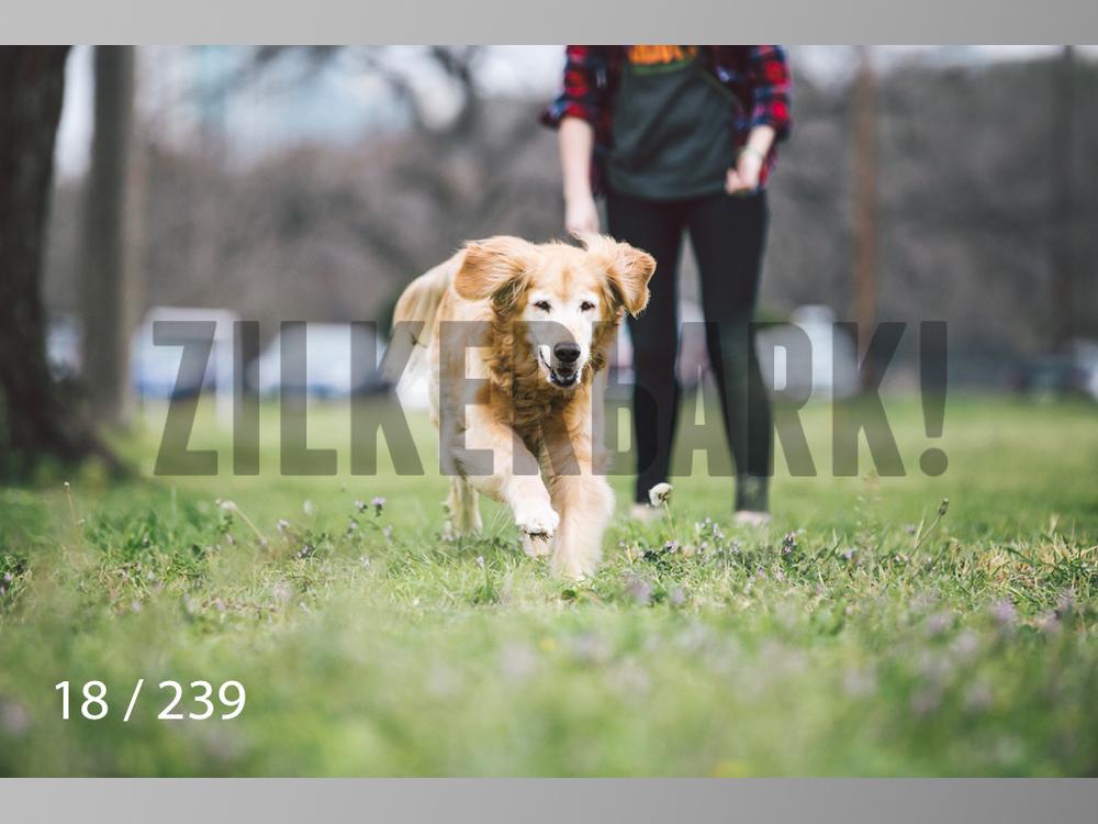 2.20 Dogs-018.jpg