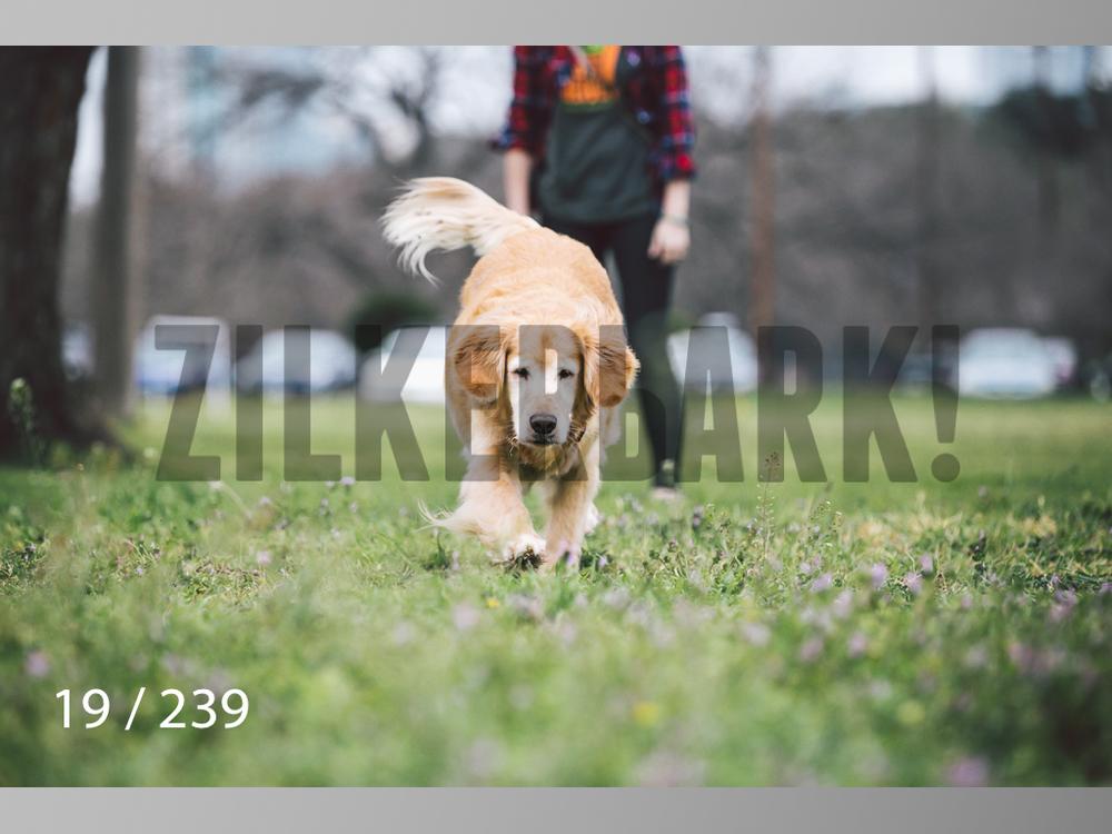 2.20 Dogs-019.jpg