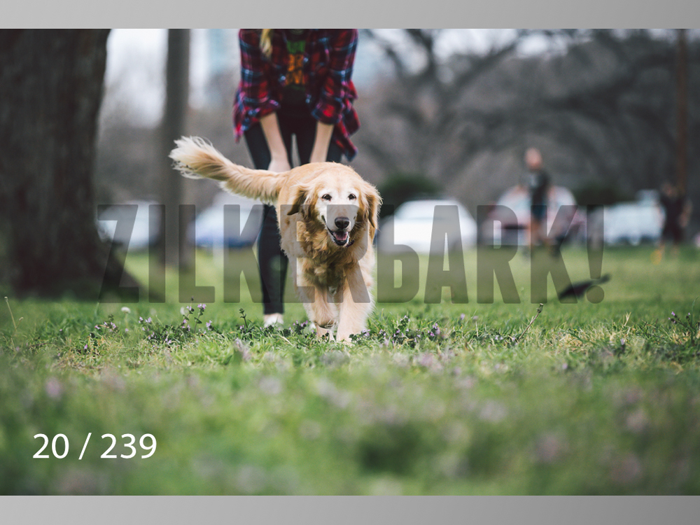 2.20 Dogs-020.jpg