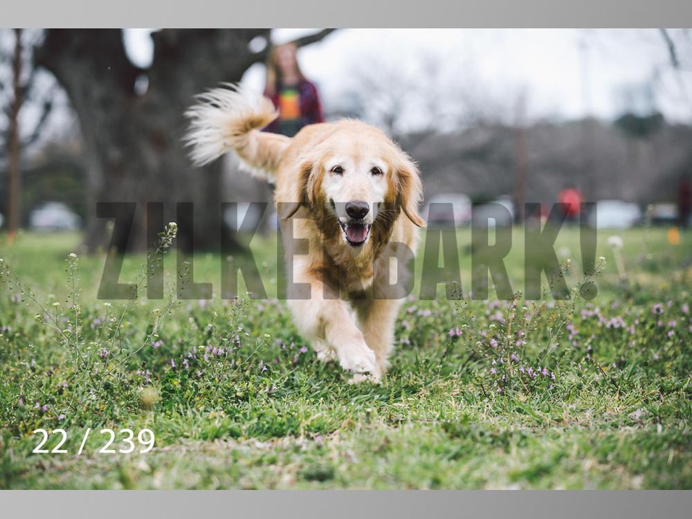 2.20 Dogs-022.jpg