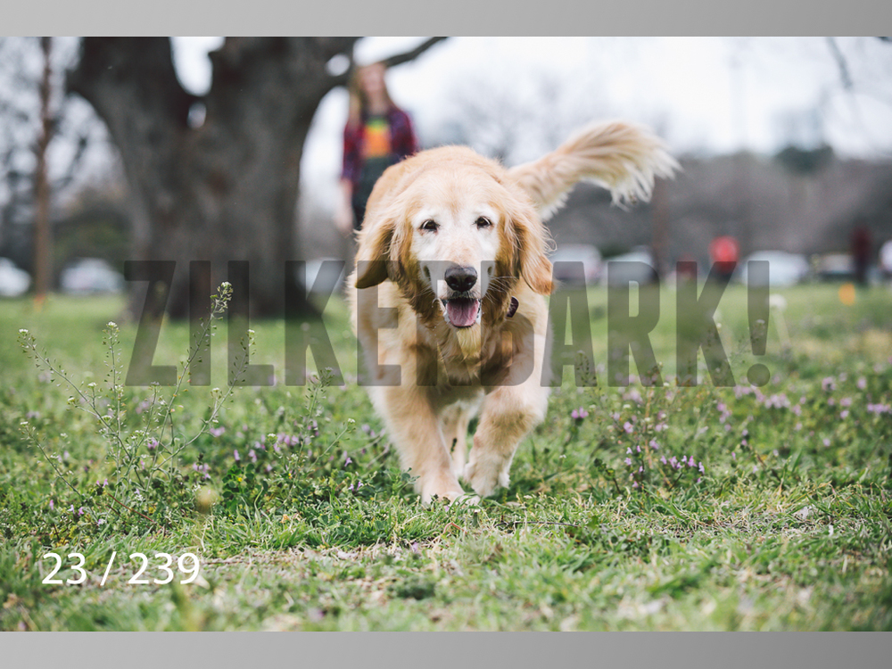 2.20 Dogs-023.jpg