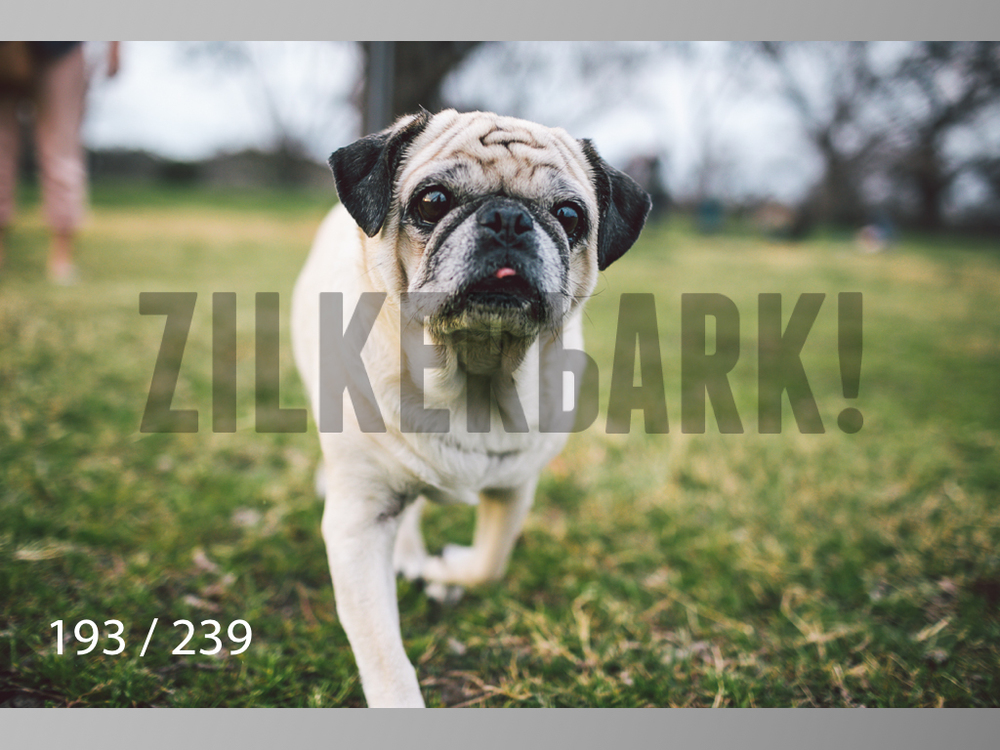 2.20 Dogs-193.jpg