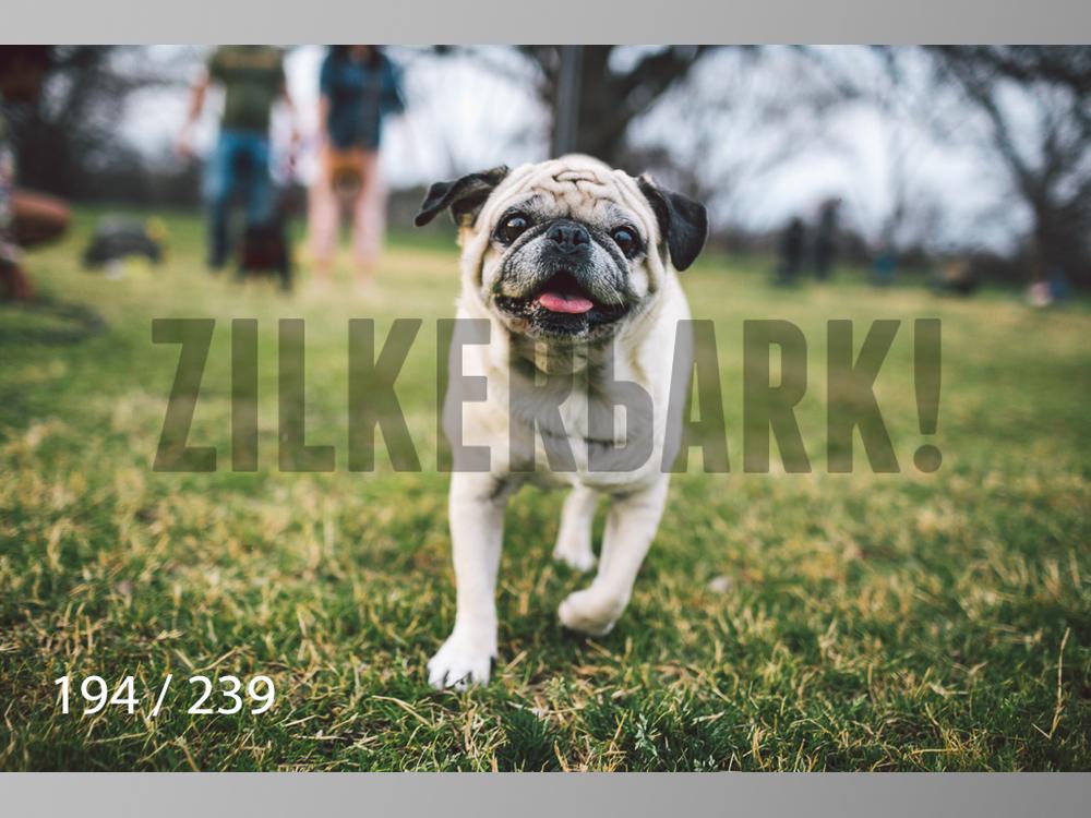 2.20 Dogs-194.jpg