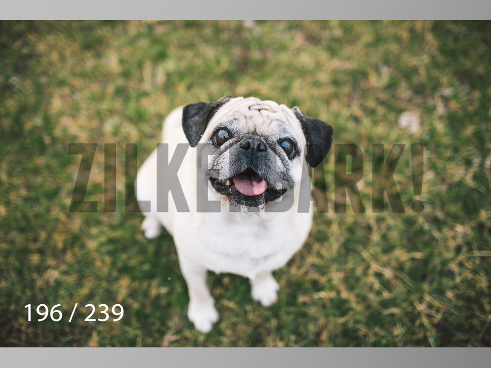 2.20 Dogs-196.jpg