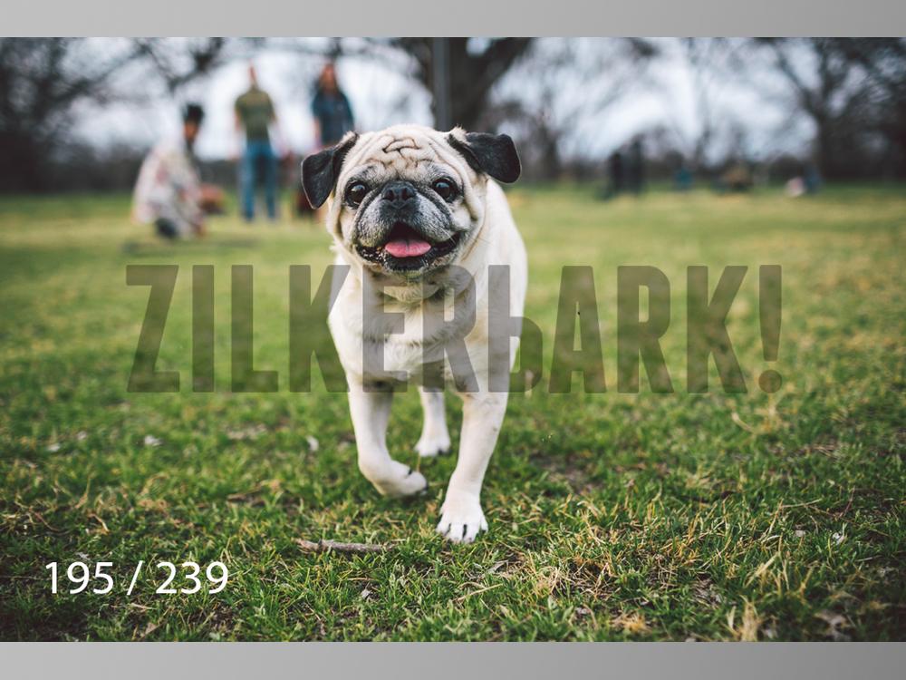 2.20 Dogs-195.jpg
