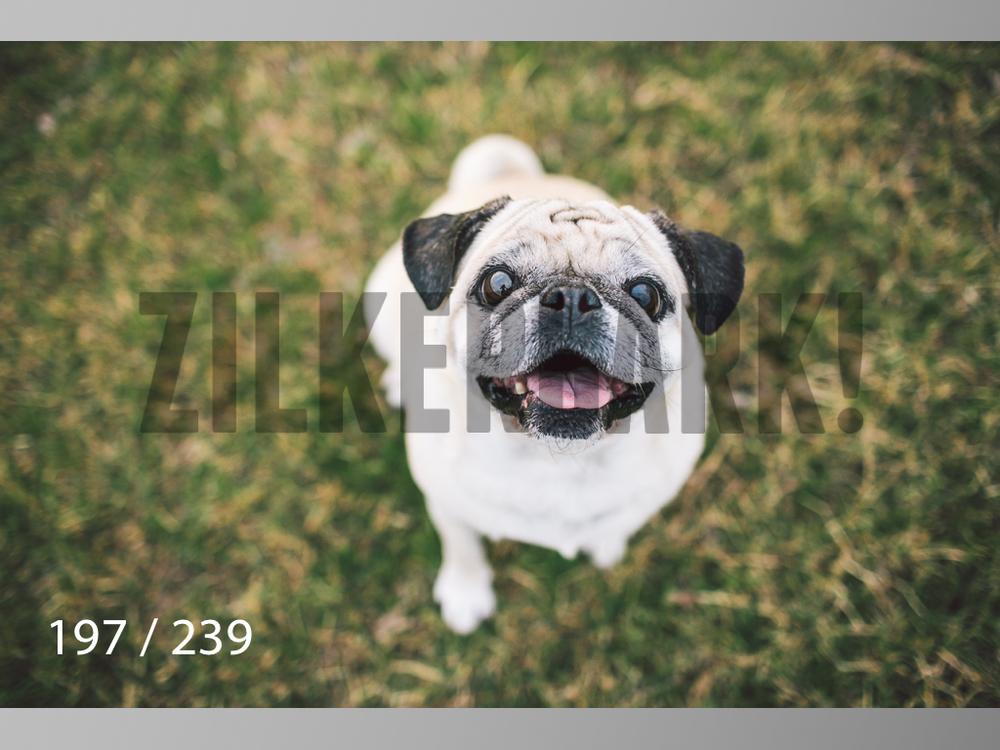 2.20 Dogs-197.jpg