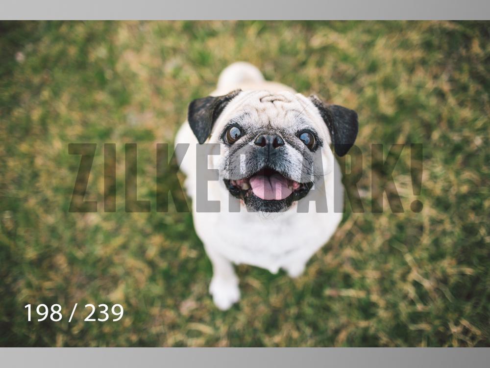 2.20 Dogs-198.jpg
