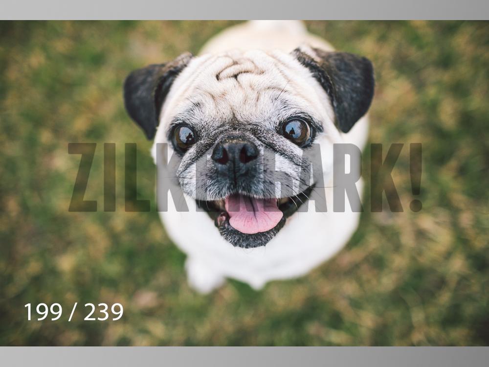 2.20 Dogs-199.jpg