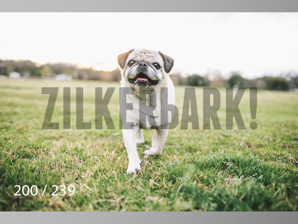 2.20 Dogs-200.jpg