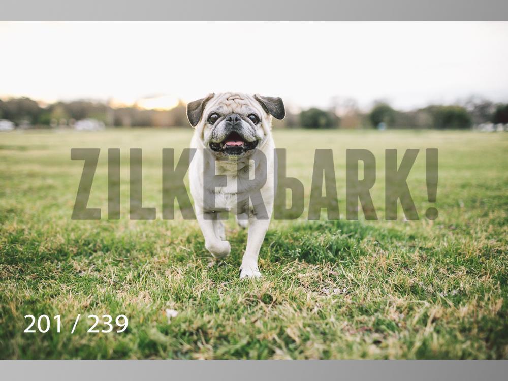 2.20 Dogs-201.jpg