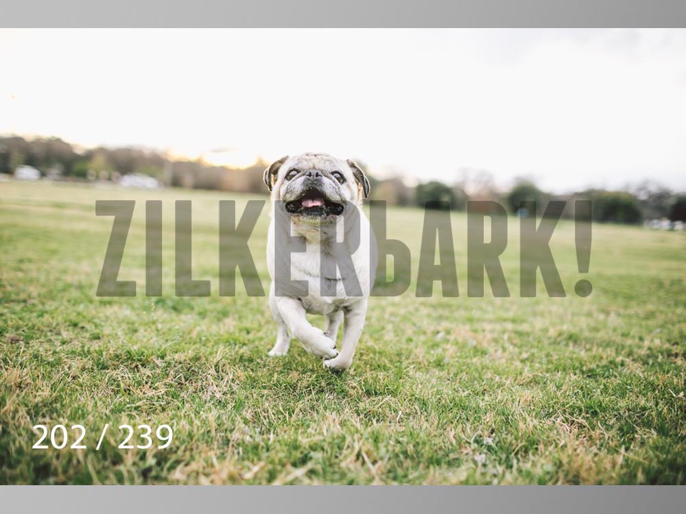 2.20 Dogs-202.jpg