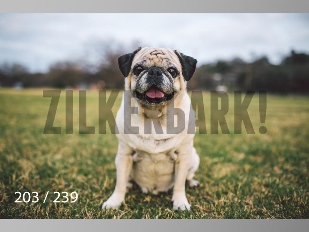2.20 Dogs-203.jpg