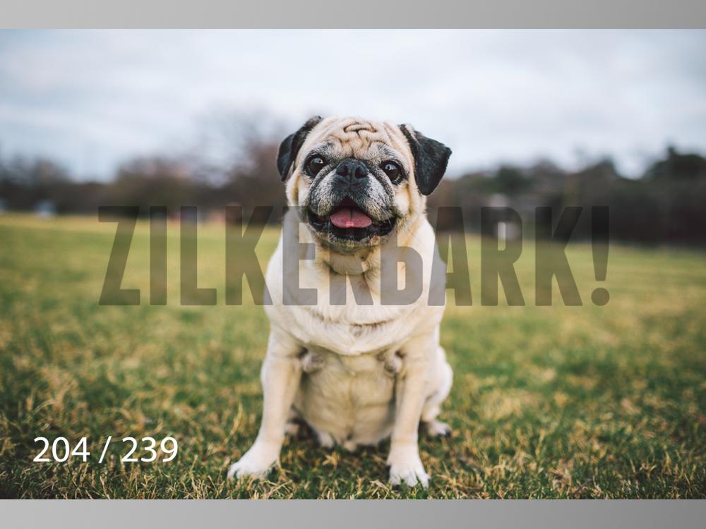 2.20 Dogs-204.jpg