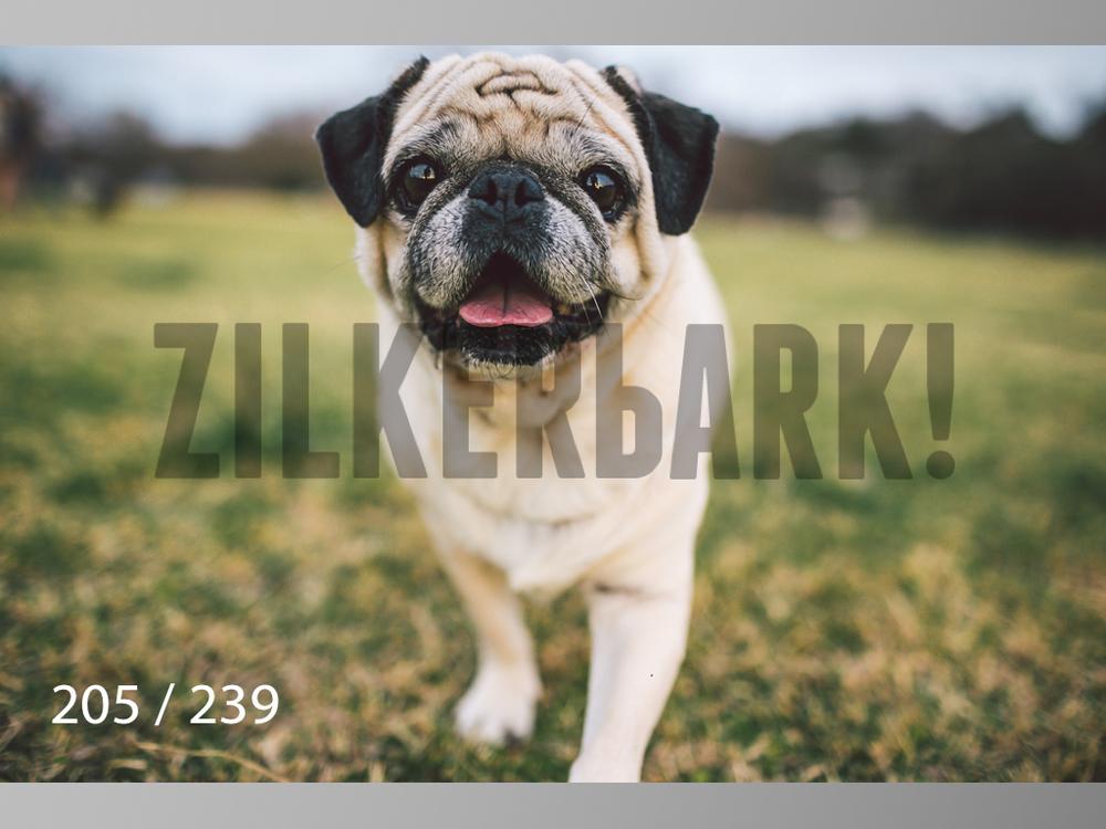 2.20 Dogs-205.jpg