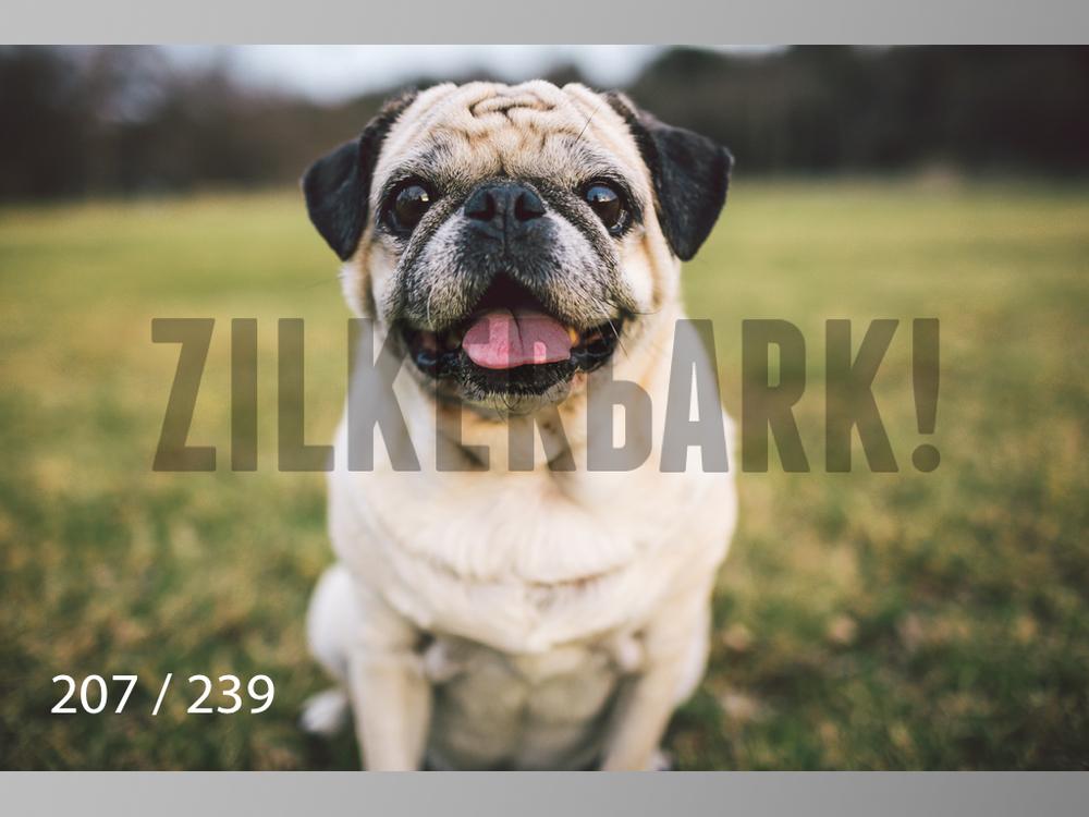 2.20 Dogs-207.jpg