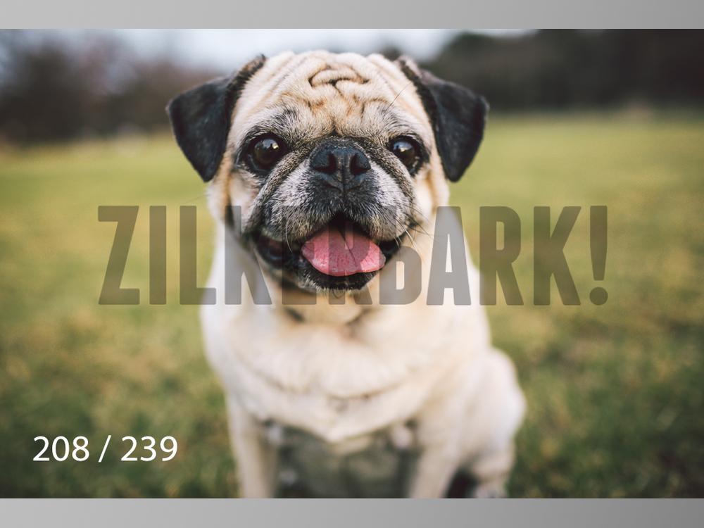 2.20 Dogs-208.jpg