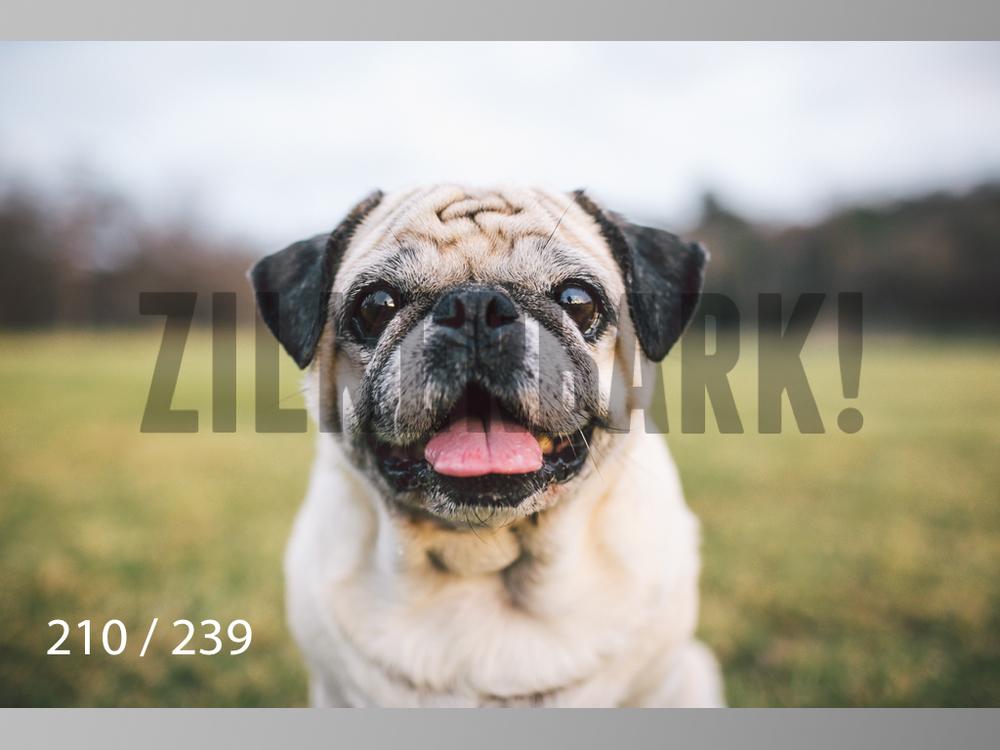 2.20 Dogs-210.jpg