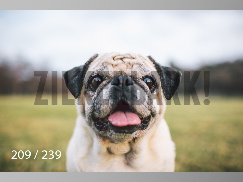 2.20 Dogs-209.jpg