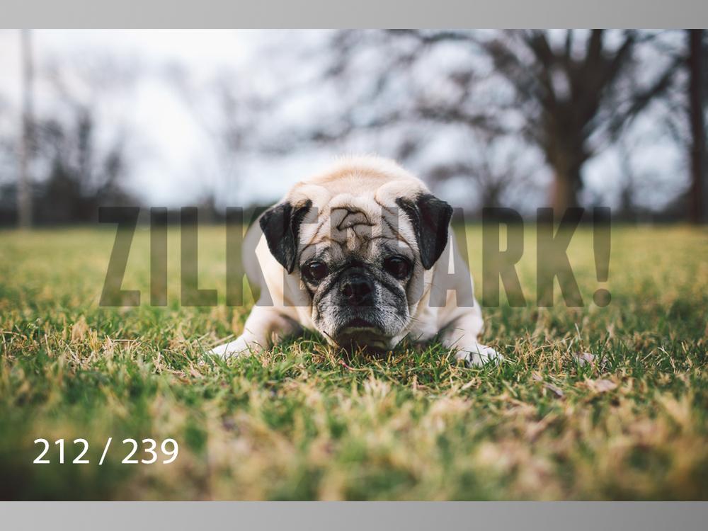 2.20 Dogs-212.jpg