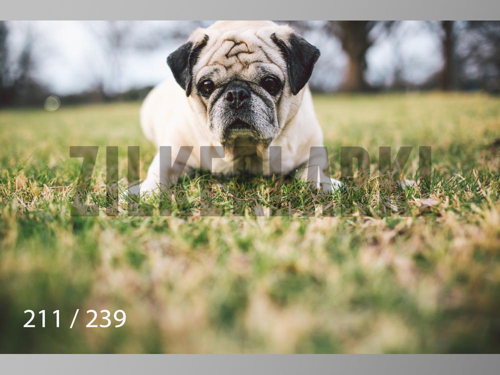 2.20 Dogs-211.jpg