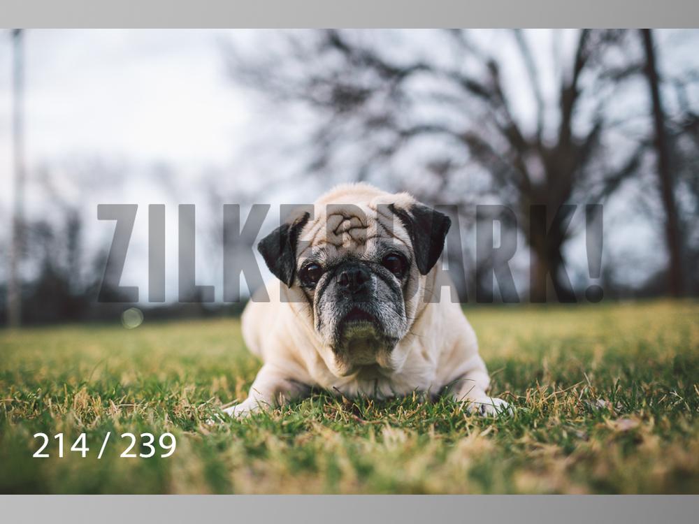 2.20 Dogs-214.jpg