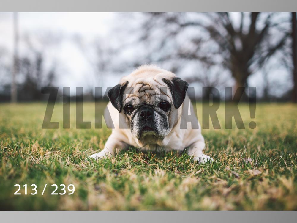2.20 Dogs-213.jpg