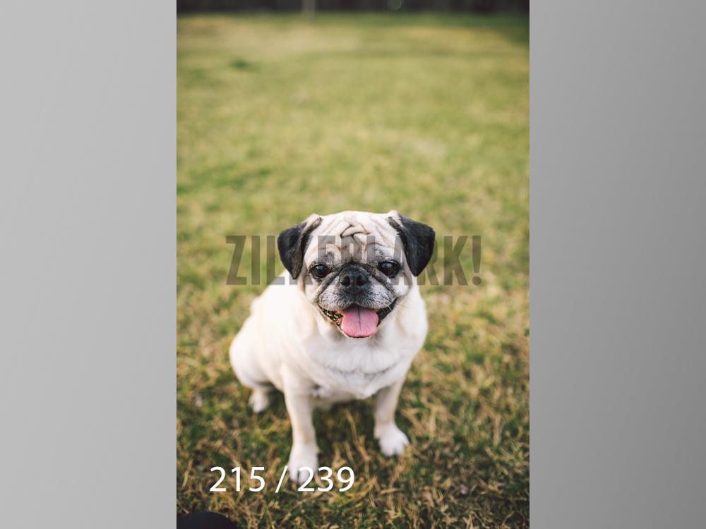 2.20 Dogs-215.jpg