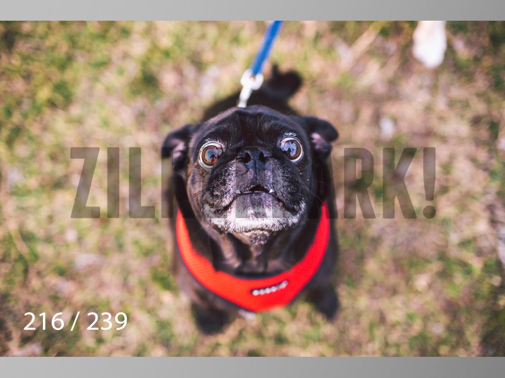 2.20 Dogs-216.jpg