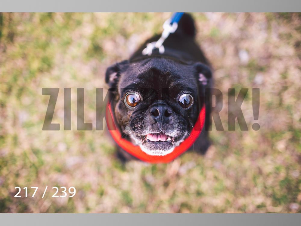 2.20 Dogs-217.jpg