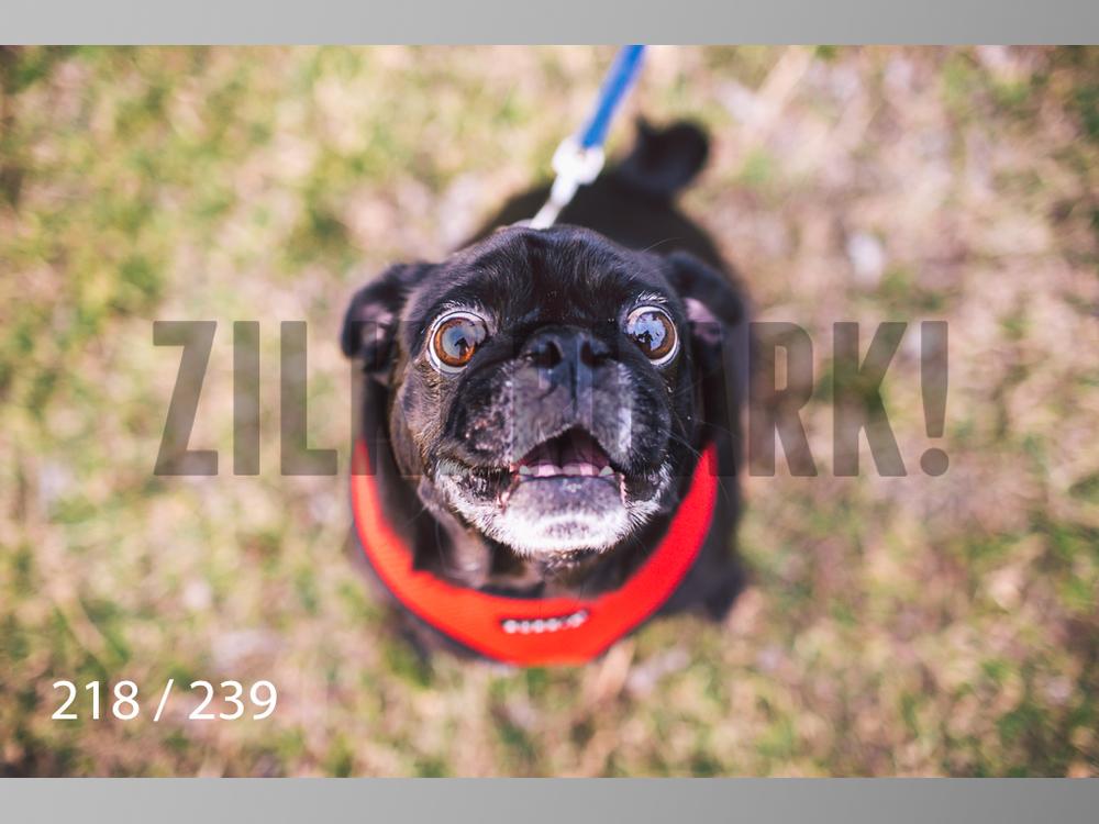 2.20 Dogs-218.jpg