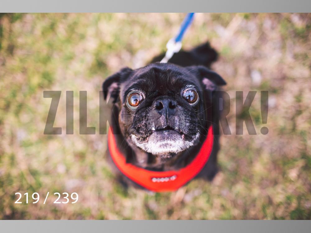 2.20 Dogs-219.jpg