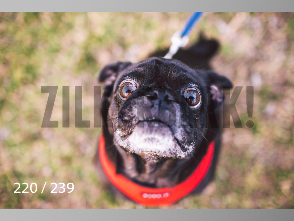 2.20 Dogs-220.jpg