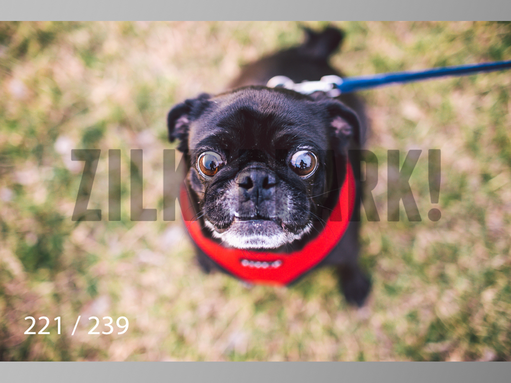 2.20 Dogs-221.jpg