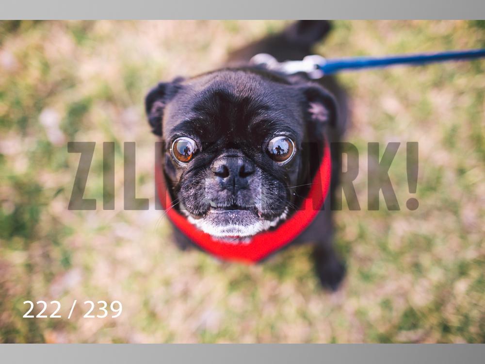 2.20 Dogs-222.jpg
