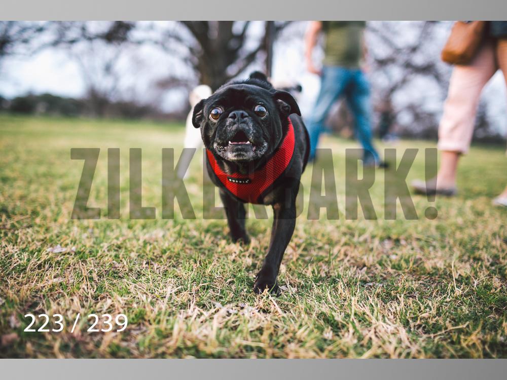 2.20 Dogs-223.jpg