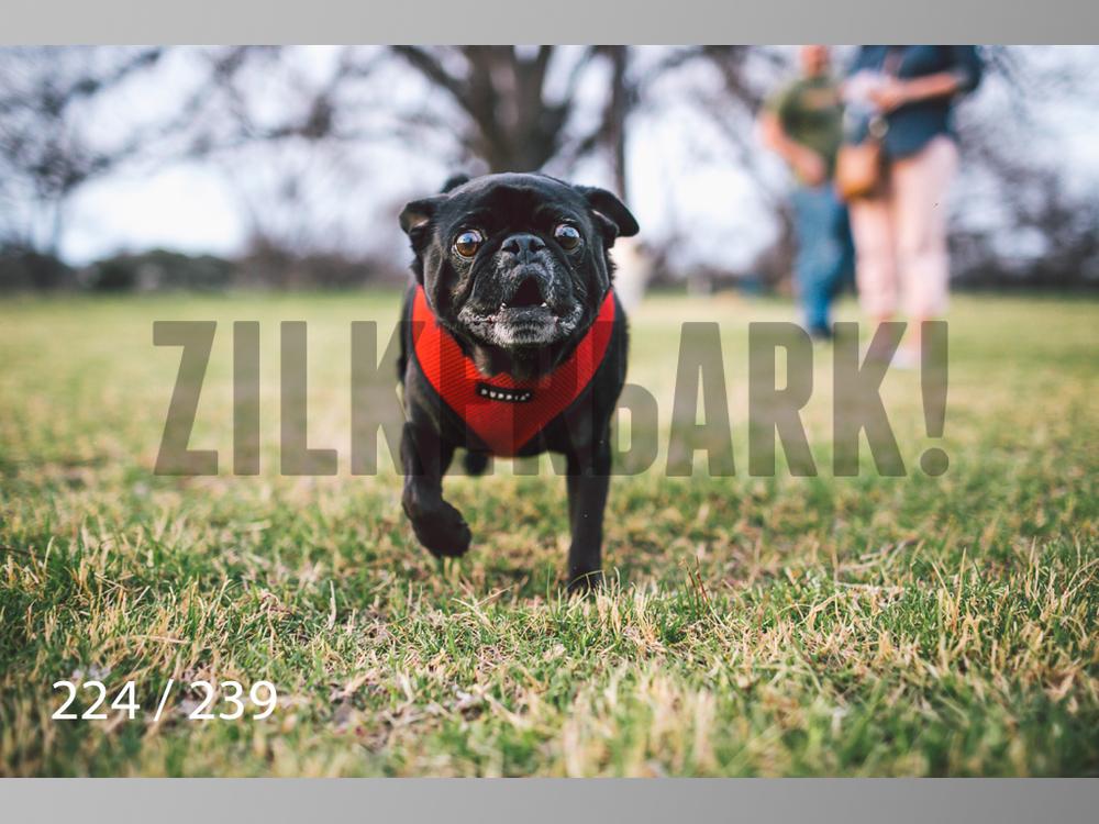 2.20 Dogs-224.jpg