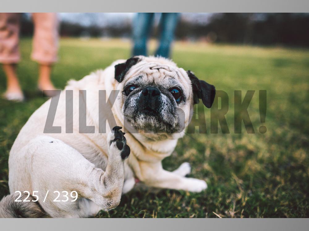 2.20 Dogs-225.jpg