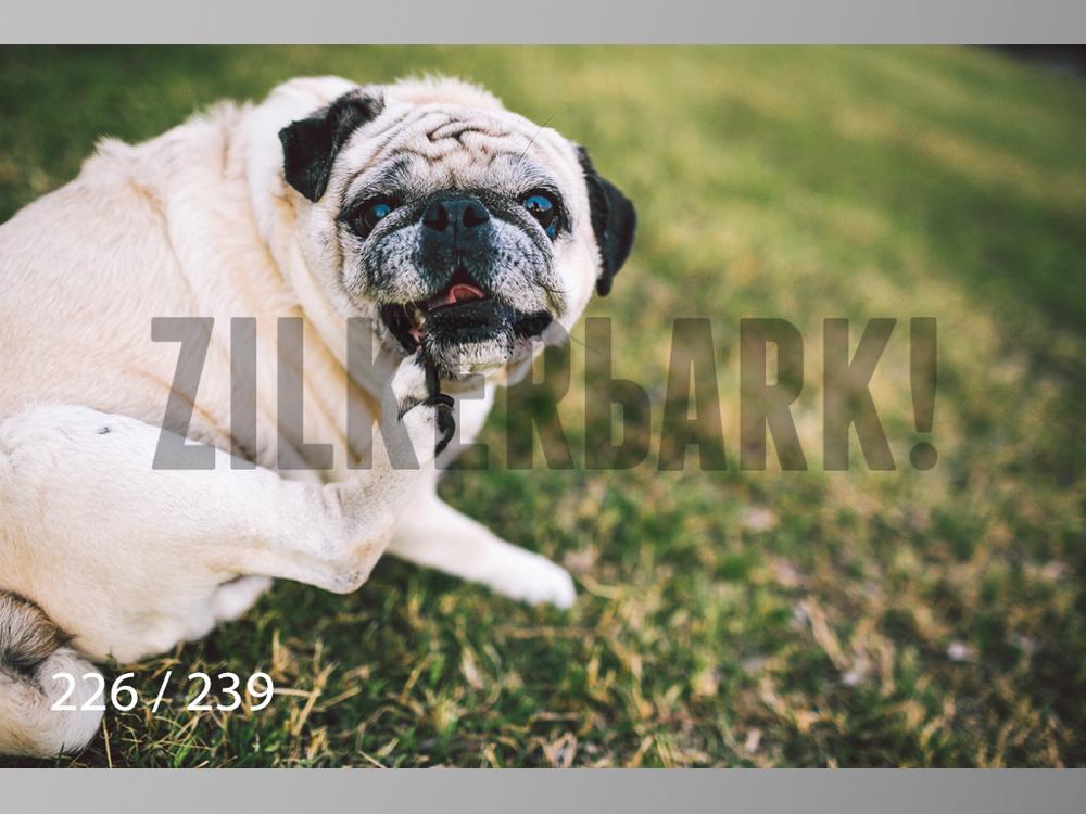 2.20 Dogs-226.jpg