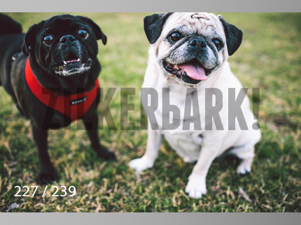 2.20 Dogs-227.jpg