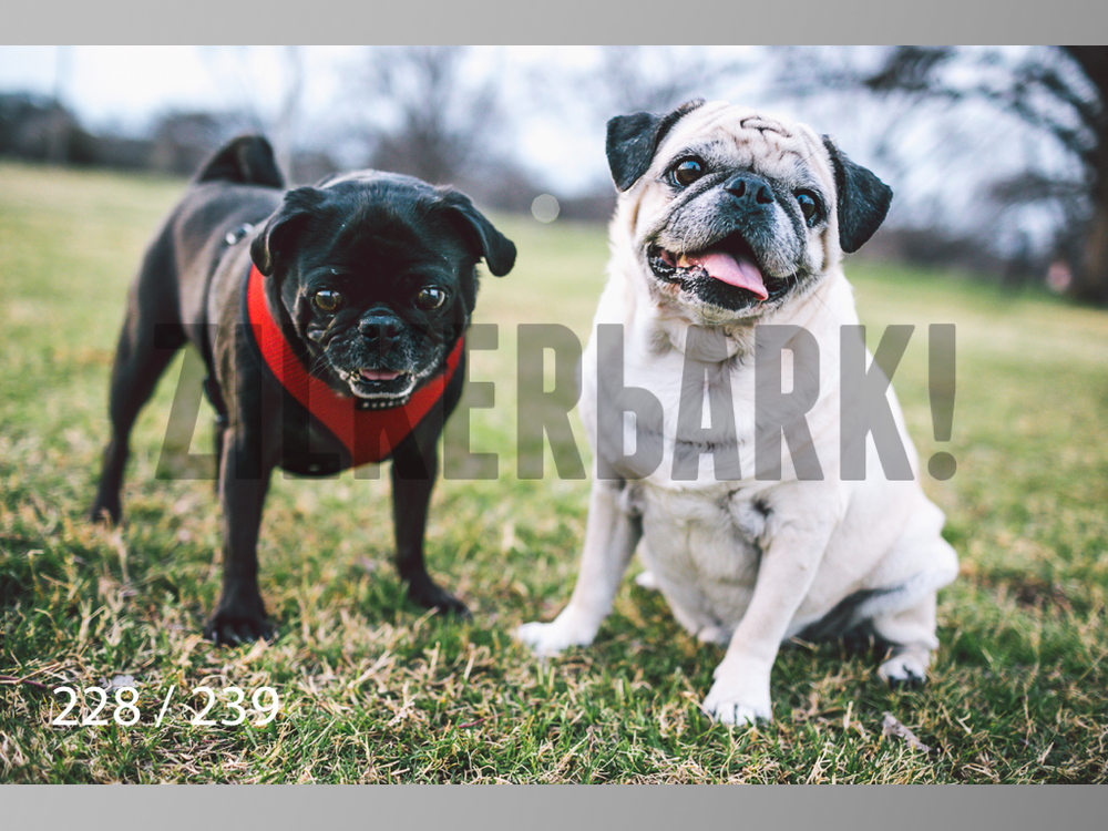2.20 Dogs-228.jpg