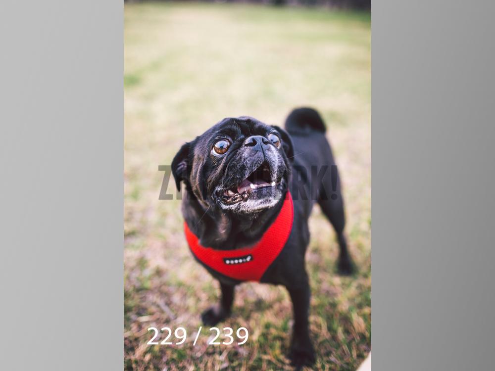 2.20 Dogs-229.jpg